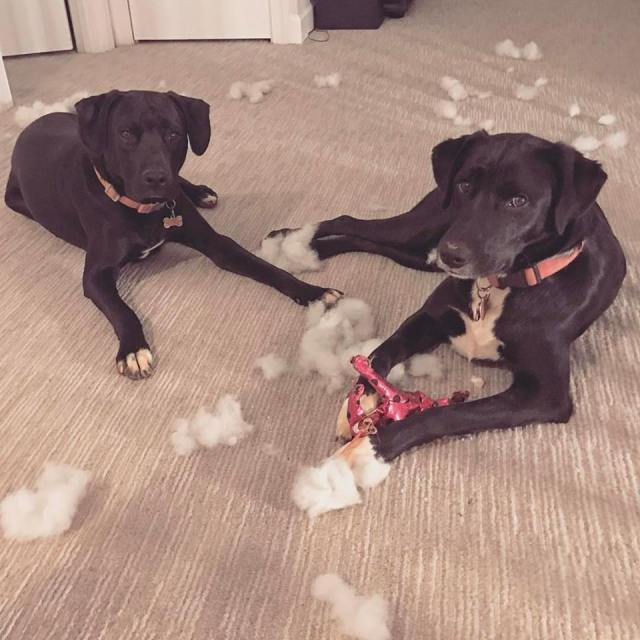 Tough Dog Toys To Keep Them Distracted